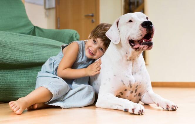 8 cosas que debes saber antes de contratar un seguro para perros
